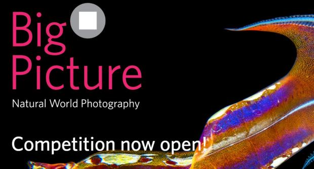 2020 BigPicture Natural World Photography Competition