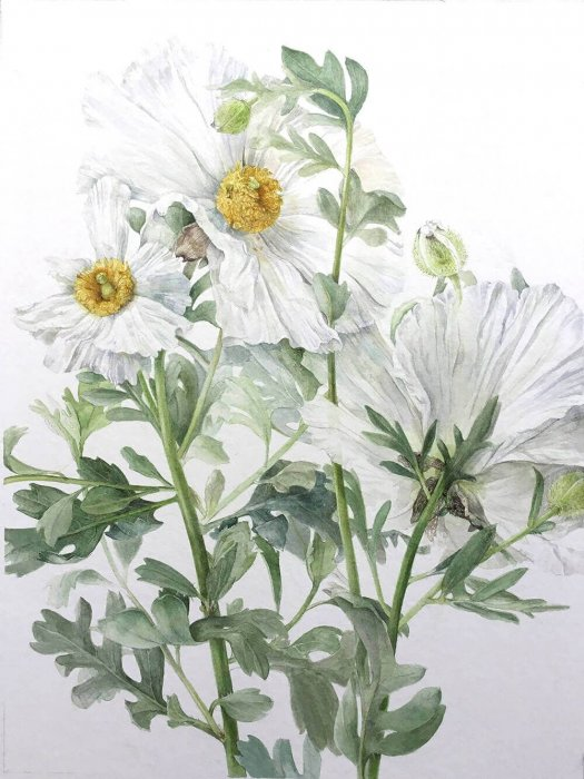 Online Course: Botanical Illustration